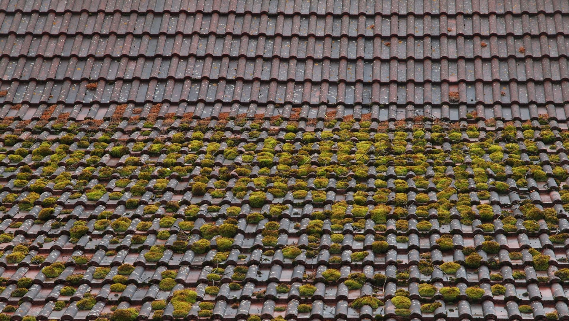 Moss Removal Mansfield, Nottinghamshire