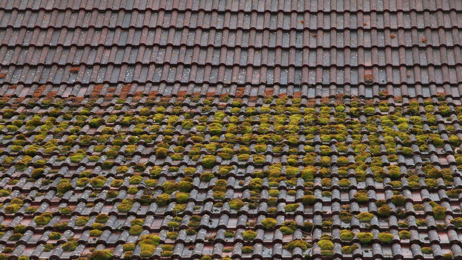 Moss Removal Newark, Nottinghamshire